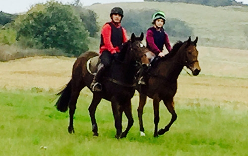 flat and national hunt racehorse training